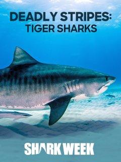 shark press and refresh manual